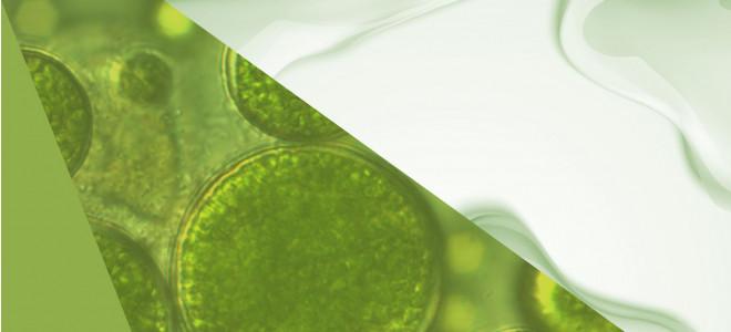 Trend Alert: Active Algae