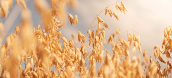 OAT - The Healthy Grain