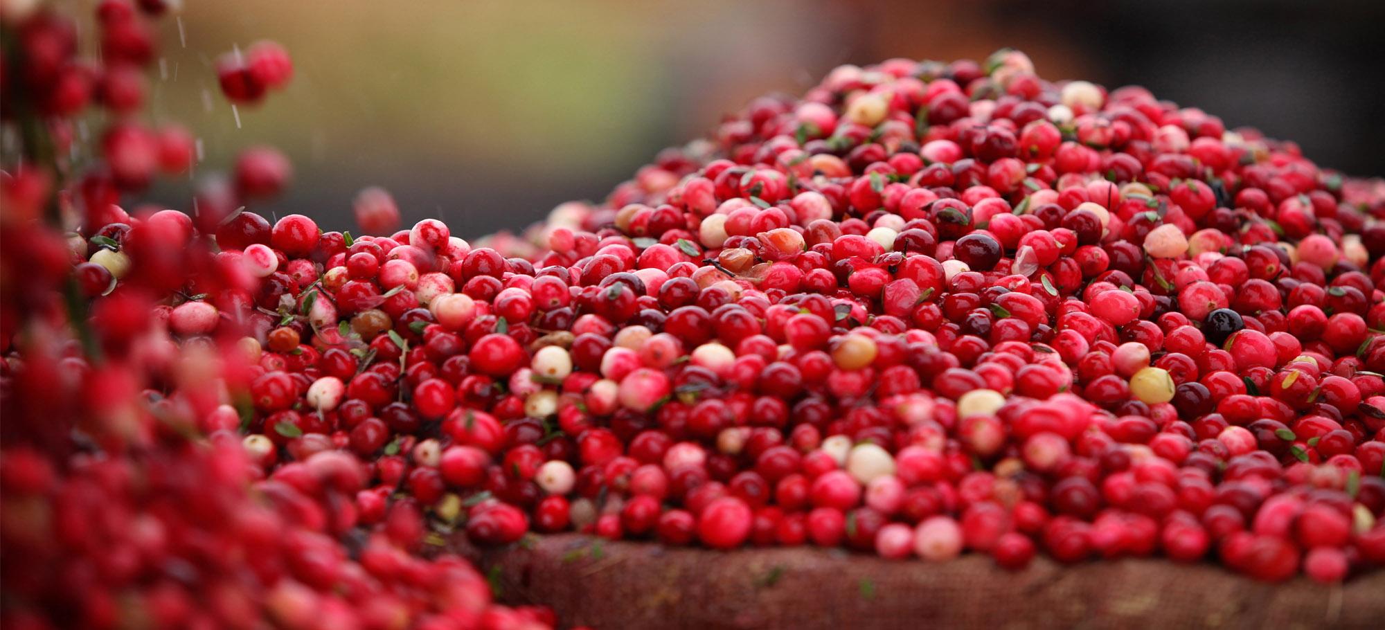 Cranberry 360°